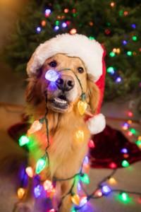Gewijzigde openingstijden feestdagen